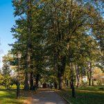Alejka między drzewami liściastymi w parku.